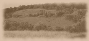 box hill Sepia