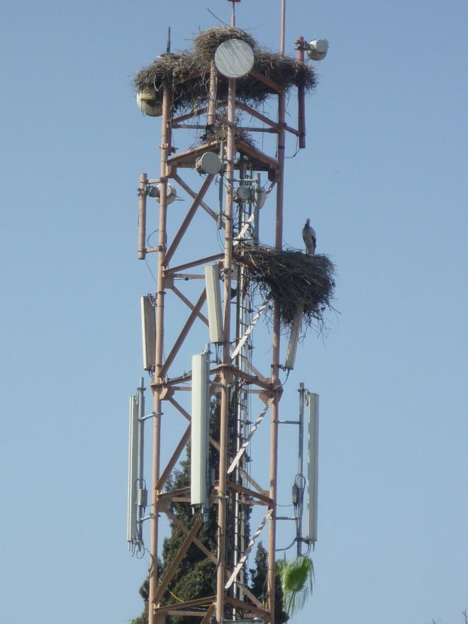 Techno stork
