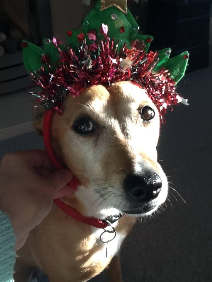 Suki at Christmas